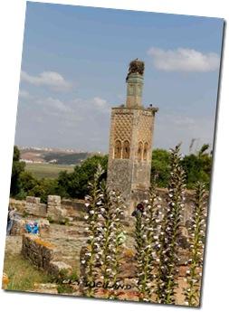 Minaret - Le Chellah
