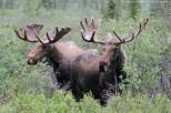Elan - Denali National Park - Alaska