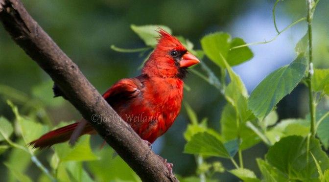 10 conseils pour la photographie d'oiseaux